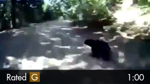 Guy Riding Dirt Bike Motorcycle Hits Black Bear
