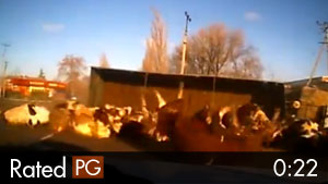 Truckload Full of Cows Tips Over After Crash